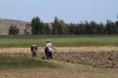 Agriculture in Ethiopia Stock Photography