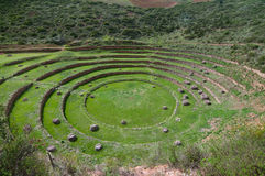 Agriculture experiment of the Incas Stock Image