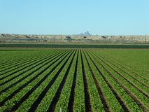 Agriculture. Farm in Arizona Royalty Free Stock Images