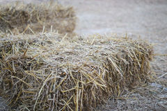Agriculture farm and farming symbol of harvest time with dried g Royalty Free Stock Photo