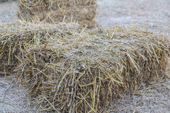 Agriculture farm and farming symbol of harvest time with dried g. Rass straw ,closeup image of hay Stock Images