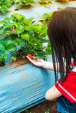 Agriculture farm. Happy asian child looking fresh strawberry. Agriculture farm. Ripe and unripe organic strawberry fruit growing on plantation. Back view of Royalty Free Stock Image