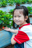 Agriculture farm. Happy asian child smiling and showing fresh st. Agriculture farm. Ripe and unripe organic strawberry fruit growing on plantation. Happy asian Royalty Free Stock Photos