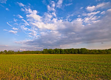Agriculture farm landscape. With clouds in the afternoon Royalty Free Stock Photo