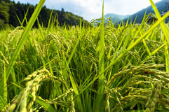 Agriculture, farm scene in rural Japan Stock Photos