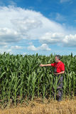 Agriculture, farmer in corn field Stock Photography