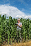 Agriculture, farmer in corn field Stock Photos