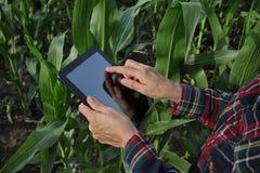 Agriculture, farmer examining corn field Stock Photos