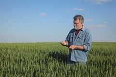 Agriculture, farmer examining wheat field using tablet Royalty Free Stock Photo