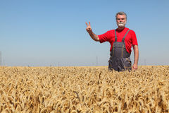 Agriculture, farmer gesturing in wheat field with hand sign V Stock Images