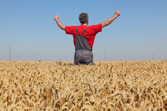 Agriculture, farmer gesturing in wheat field with thumbs up Royalty Free Stock Images