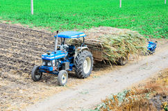 Nakhon Sawan, Thailand : The agriculture Stock Photography