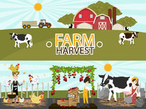 Agriculture and Farming.Vector illustration. Agriculture and Farming. Agribusiness. Rural landscape. Design elements for info graphic, websites and print media Stock Photography