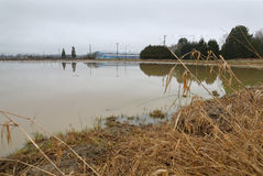 Agriculture Farmland Flooding Royalty Free Stock Photography