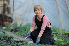 Agriculture, female farmer in greenhouse Royalty Free Stock Photography