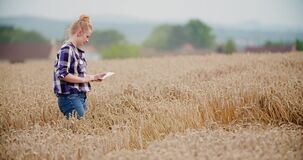 Agriculture female farmer walking in wheat field with digital tablet