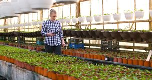Agriculture female gardener working in greenhouse. Female farmer gardener working with plant at greenhouse agriculture stock video footage