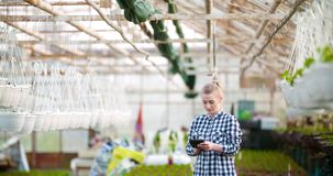 Agriculture female gardener working in greenhouse. Female farmer gardener working with plant at greenhouse agriculture stock footage