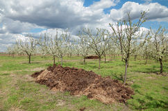 Agriculture, fertilizer in orchard Stock Photo
