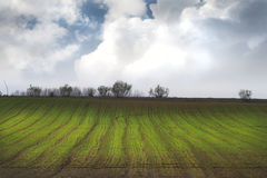 Agriculture field Royalty Free Stock Images