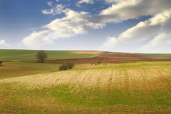 Agriculture field Royalty Free Stock Photography