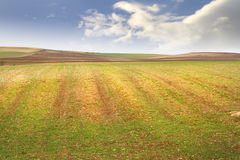 Agriculture field Royalty Free Stock Photo