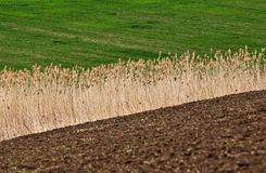 Agriculture field Stock Images