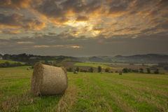 Agriculture field. During autumn sunrise Stock Photography