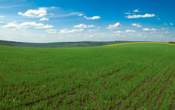 Agriculture field. With cloudscape. Panorama Stock Photos