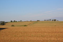 Agriculture field. Large agriculture field, tipical european field of agriculture Royalty Free Stock Photography