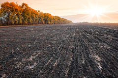 Agriculture field. Agriculture plowed field in autumn Royalty Free Stock Image