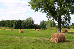 Agriculture field. With rolls of hay Stock Photo