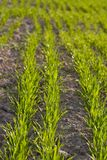 Agriculture field Stock Photos