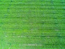 Agriculture field from above Stock Image