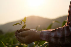 Agriculture Field baby plant on hand. stock photo