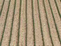Agriculture field background. In spring, view from top Royalty Free Stock Photography