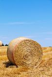 Agriculture. Field with bales of straw Stock Photo