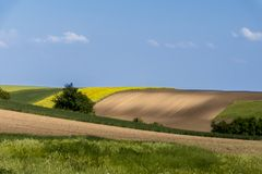 Agriculture field and blue sky Stock Photo
