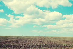 Agriculture field and blue sky Royalty Free Stock Images