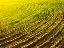 Agriculture field. Of curves and showy colors Royalty Free Stock Photos
