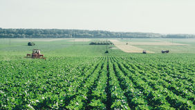 Agriculture field with distant tractors in retro film camera effect. Royalty Free Stock Image