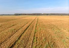 Agriculture field drone photography of cut crops stock photography