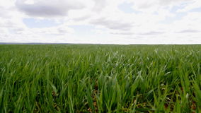 Agriculture field, environment concept stock footage