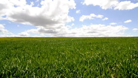 Agriculture field, environment concept stock video