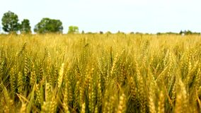 Agriculture field stock footage