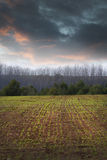 Agriculture field, green nature Stock Photos