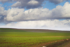 Agriculture field, green nature Royalty Free Stock Photos