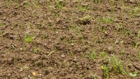 Agriculture stock footage