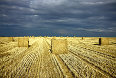 Agriculture field after harvest with roll of straw. Dramatic sky and agriculture field after harvest with roll of straw Stock Image