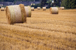 Agriculture field. Hay rolls on the agriculture field, wheat harvest time royalty free stock image